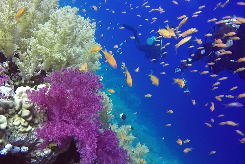 Egypt_Diving_Coral