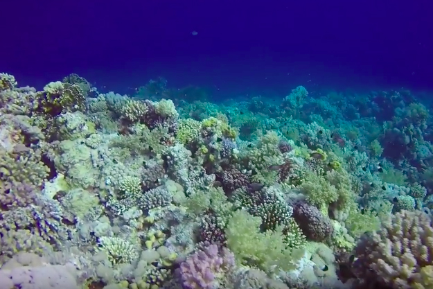 Diving with optimal light and color conditions in Sharm el Sheikh