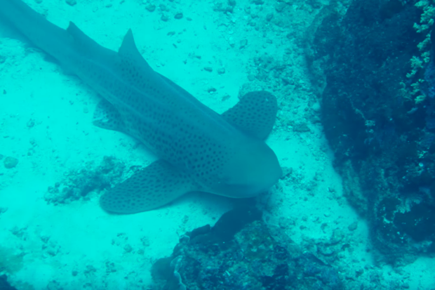 Diving Similan Islands in Thailand with MV Pawara