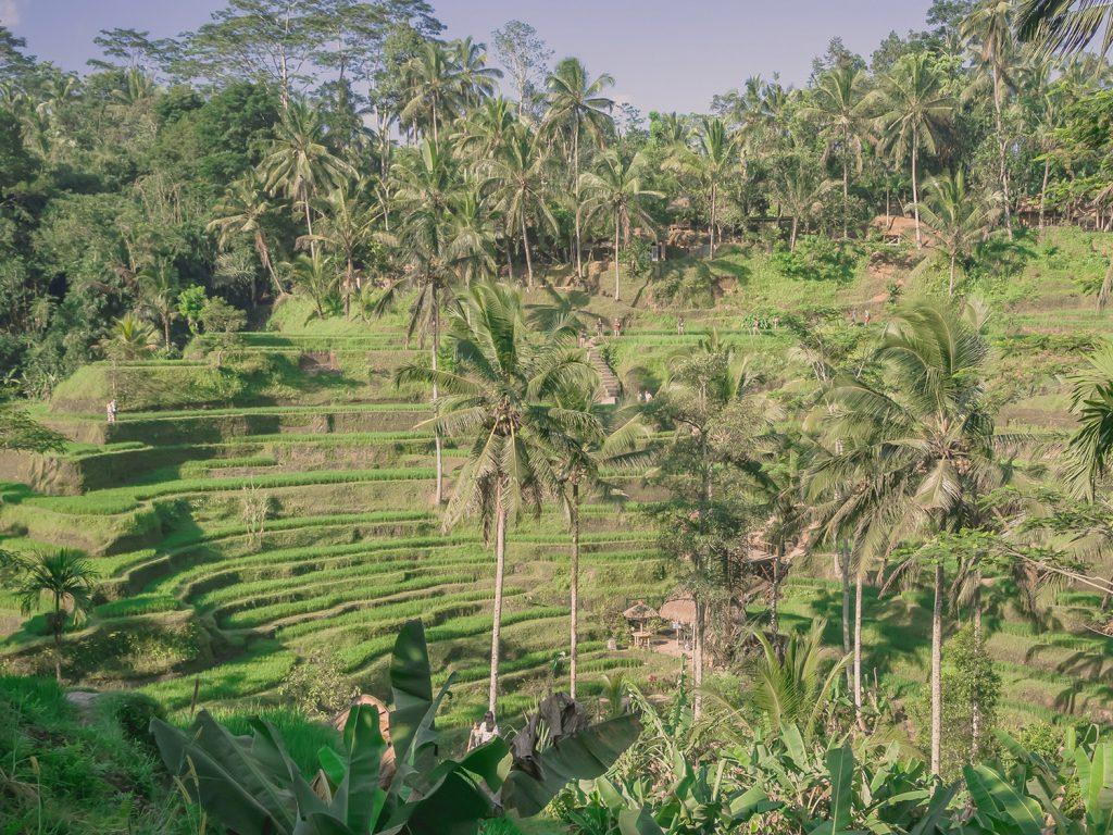 Tegallalang-Rice-TeracceBali-_TravelsAndScuba_03