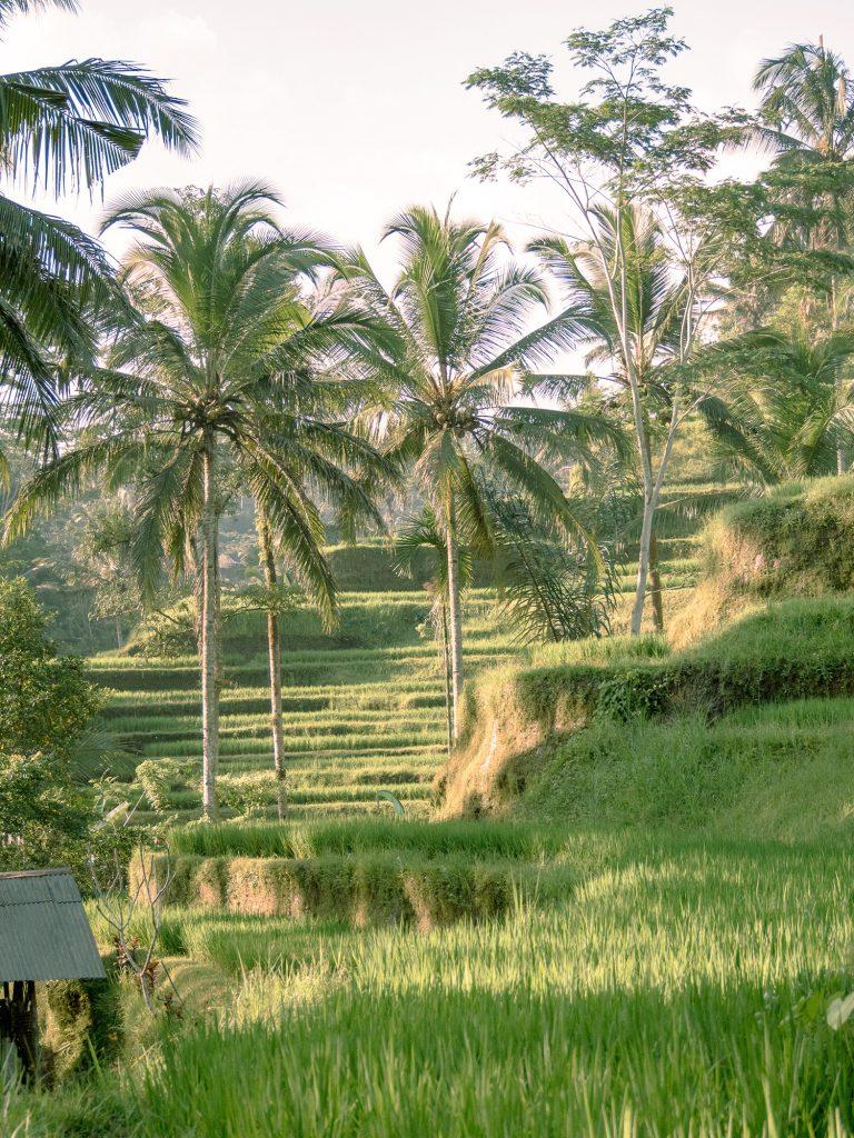 Tegallalang-Rice-TeracceBali-_TravelsAndScuba_08