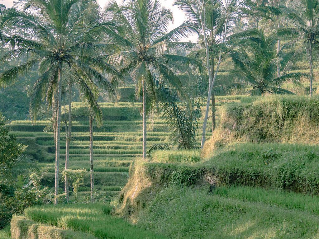 Tegallalang-Rice-TeracceBali-_TravelsAndScuba_10