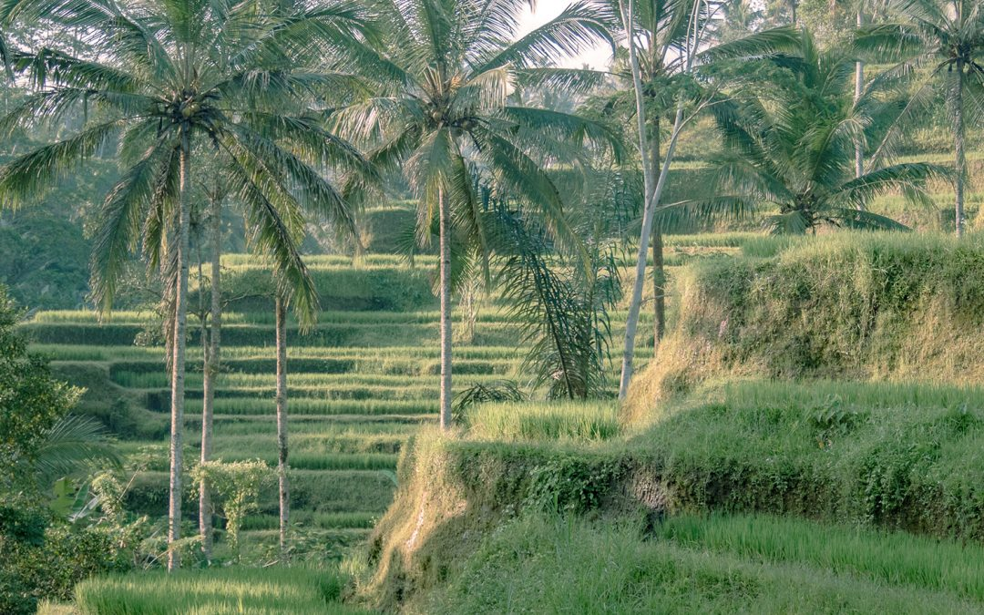 Tegallalang rice terrace in Bali, Indonesia