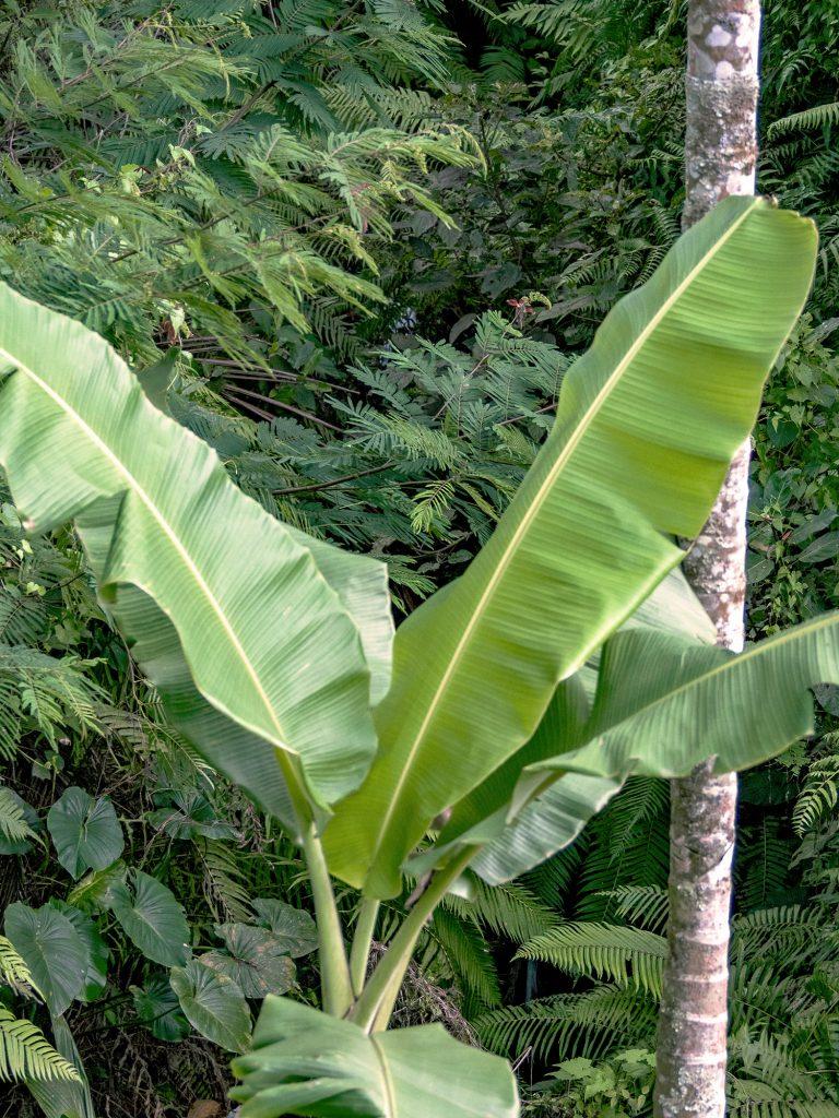 Tegallalang-Rice-TeracceBali-_TravelsAndScuba_14
