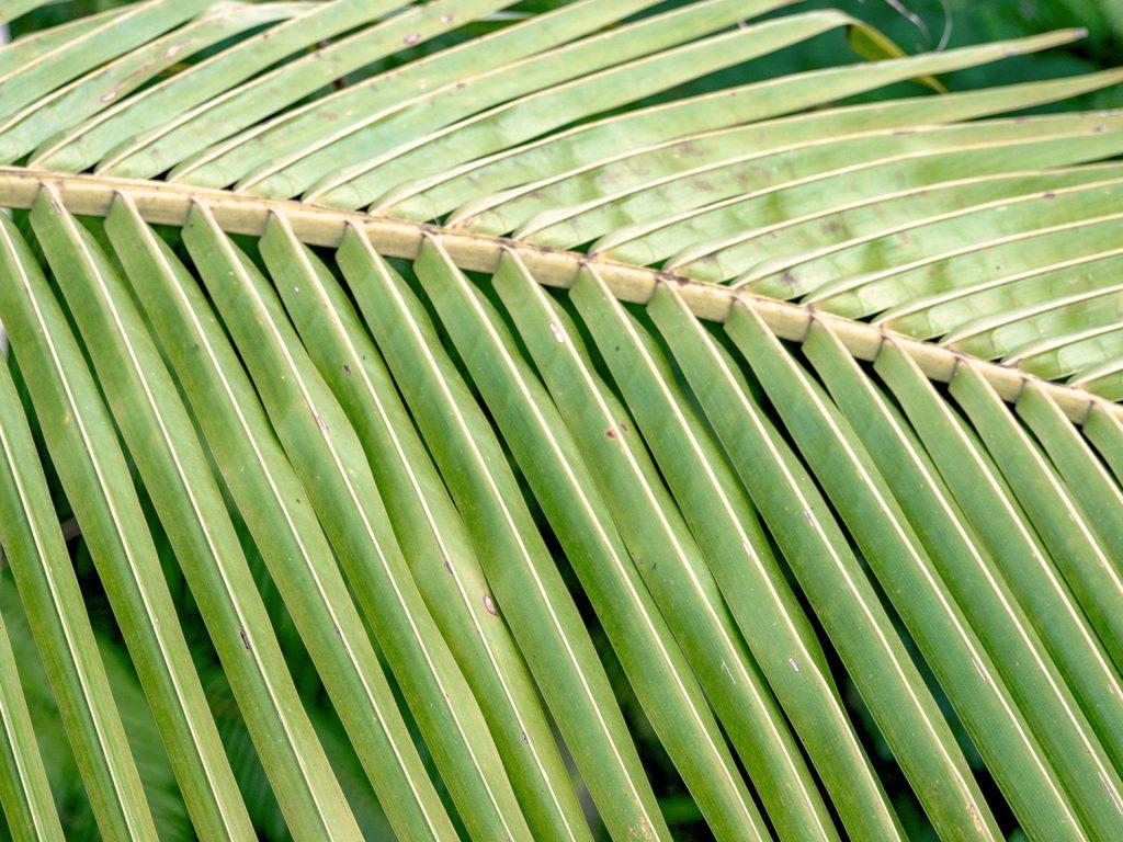 Tegallalang-Rice-TeracceBali-_TravelsAndScuba_15