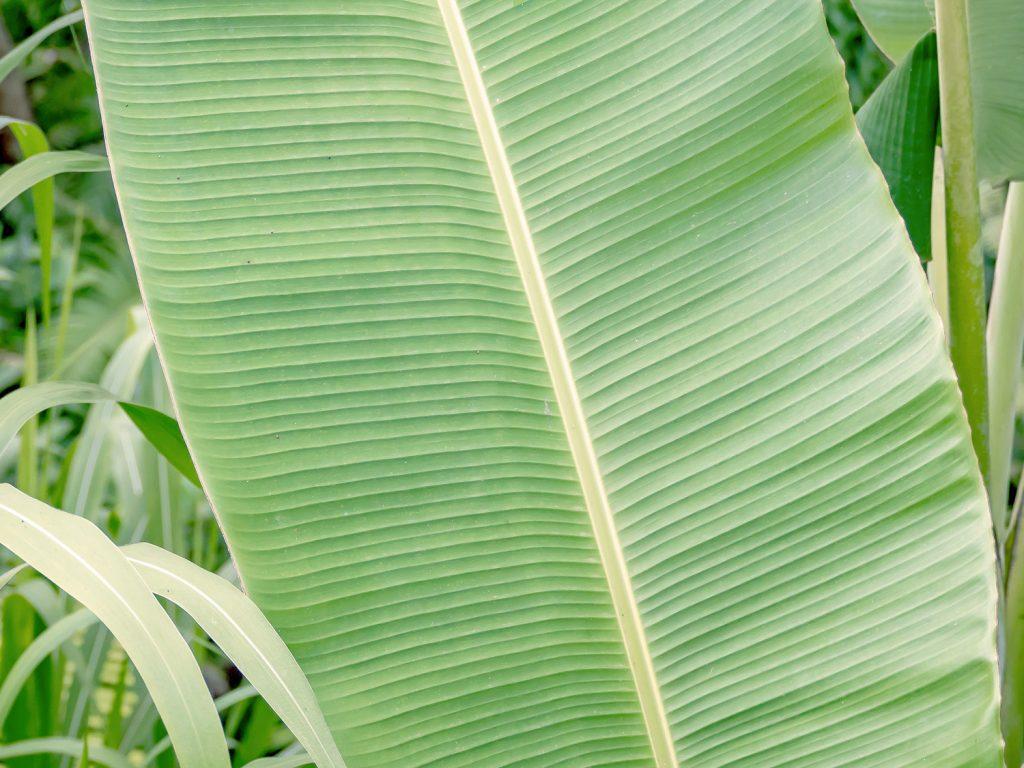 Tegallalang-Rice-TeracceBali-_TravelsAndScuba_16