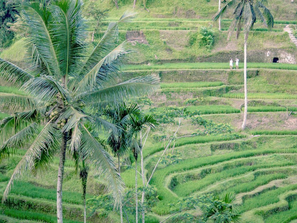 Tegallalang-Rice-TeracceBali-_TravelsAndScuba_20